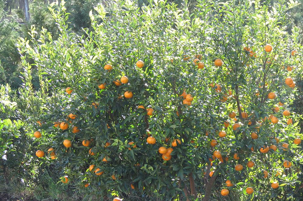 frutteto (6)